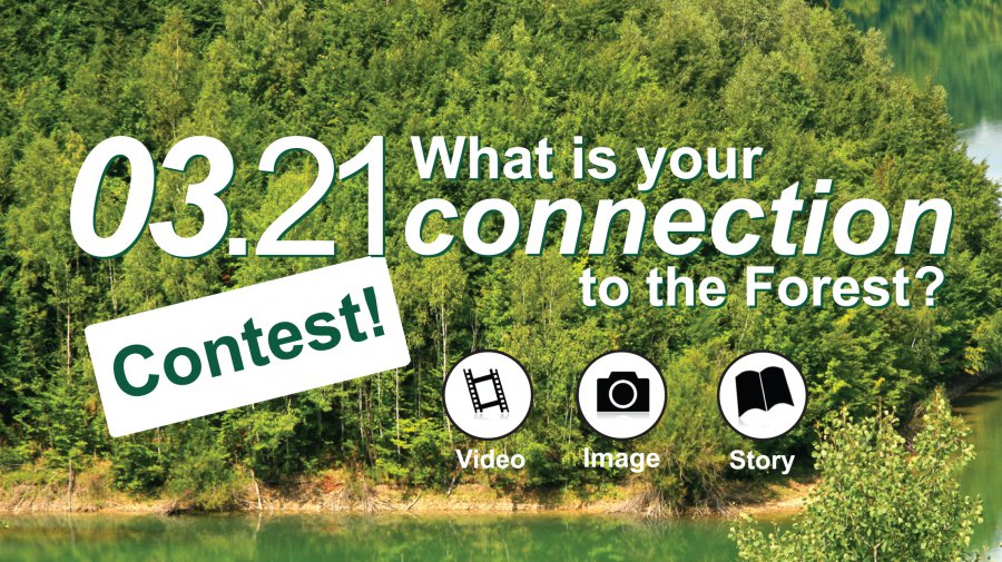 Participate in the 03.21 Contest!