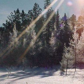 Snowy and sunny (© Images © Westwind Forest - Steve Munro, © FSC Belgium)