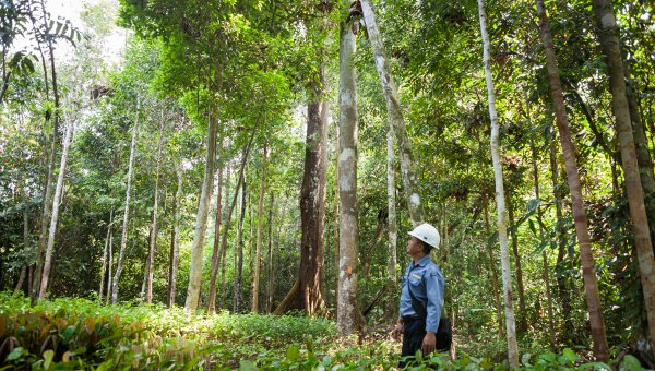 FSC-certified forest concession in Kalimantan. (© FSC Netherlands)