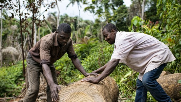 Two charcoal burners, Mathieu Atangana (right) and Fabrice Assomo (left), members of the local community living in Mbedoumou (Cameroon) are moving cut trees for burning (© Ollivier Girard for Center for International Forestry Research (CIFOR))