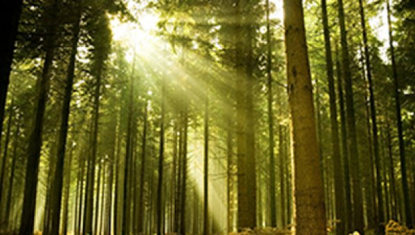 Global Forest Products Companies Come Together to Support Forest Certification (© bit.ly/1b8QNaZ)