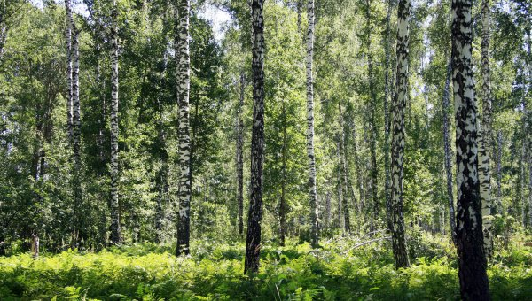 FSC Helps to Shape New Russian Forest Policy (© FSC A.C.)