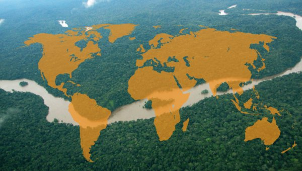 forest with world map (© FSC GD)