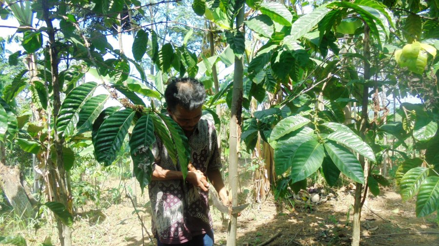 Pruning activity (© KSU Alas Mandari KTI)