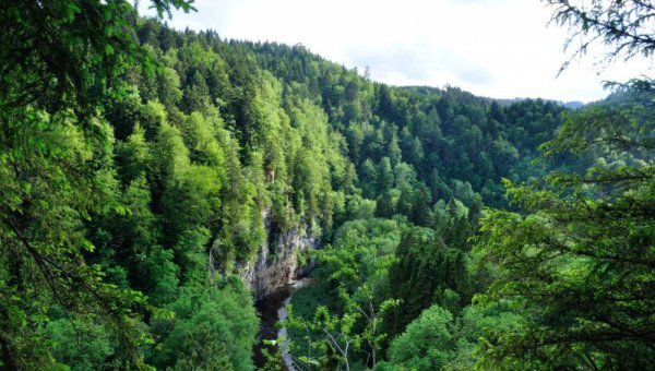 ICCOMMS_GERMANY_NAT_forest_(c) FSC Germany (© FSC Germany)